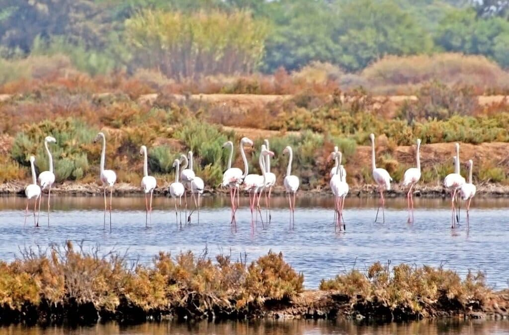 Flamingos - Portugal