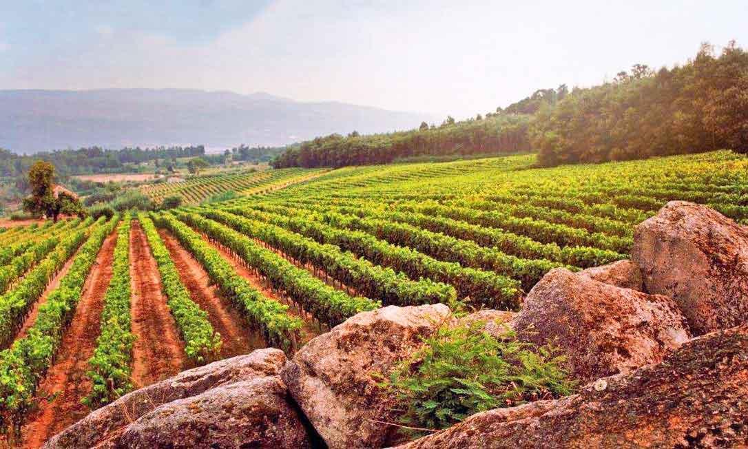 Dão Wine Region - Portugal
